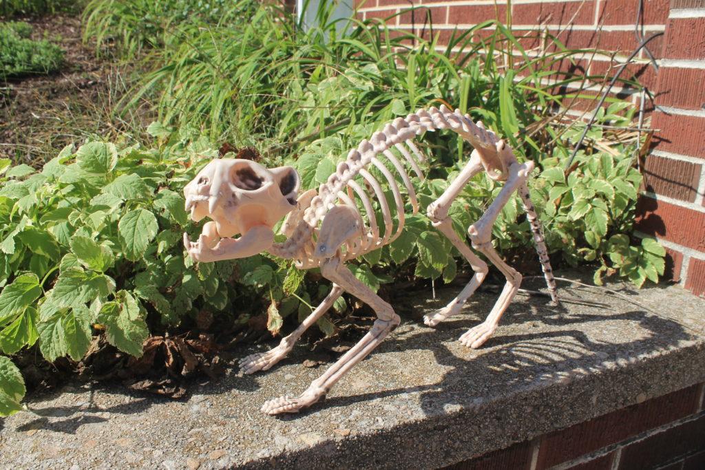 skeleton cat oriental trading
